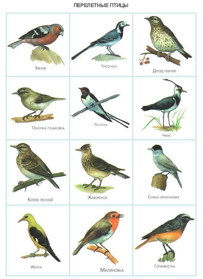 птицы россии книги - Поиск в Google | Птицы, Животные ...
