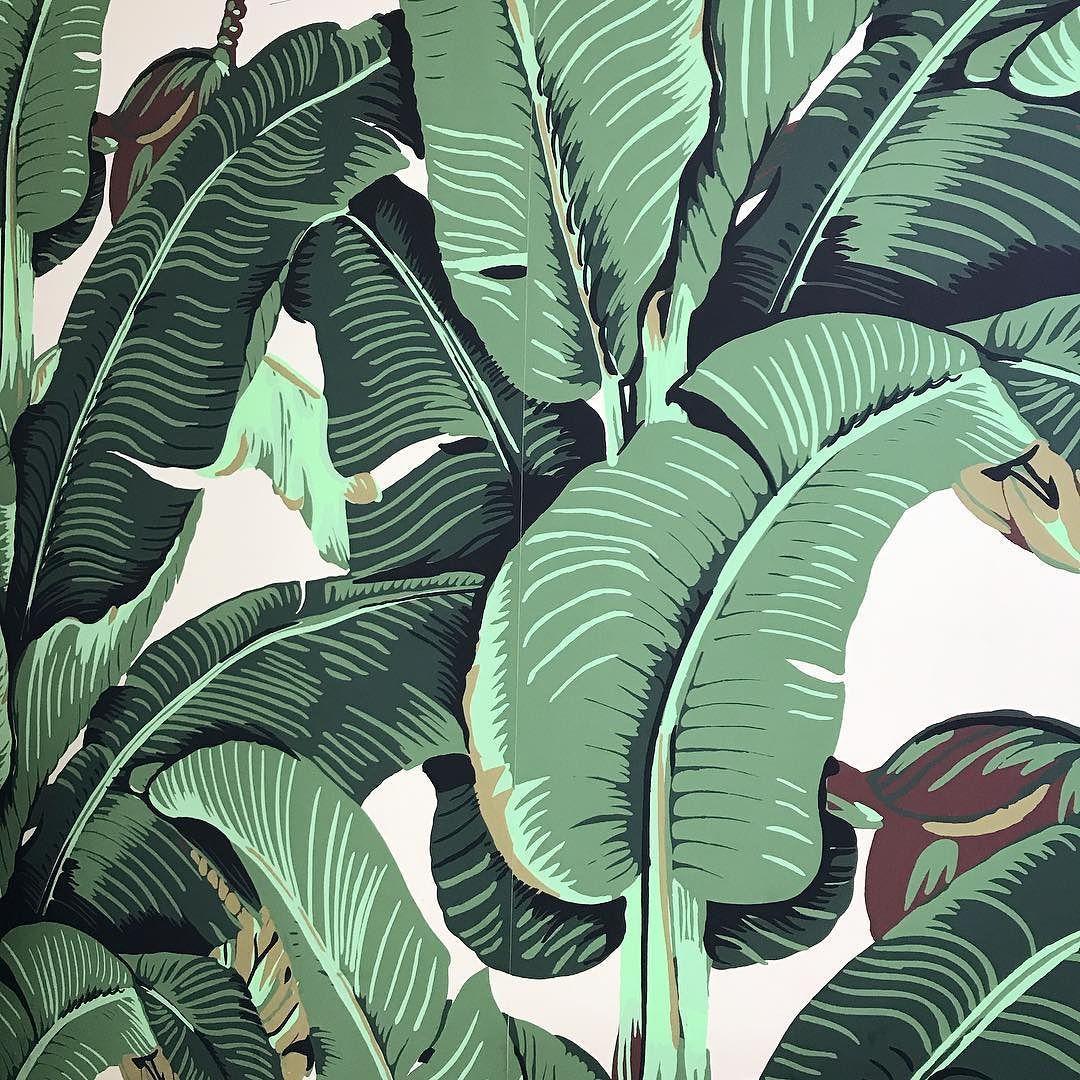The Original Beverly Hills Martinique Banana Leaf