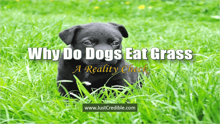 Why Do Dogs Eat Grass Is Eating Grass Good For Dogs With Images