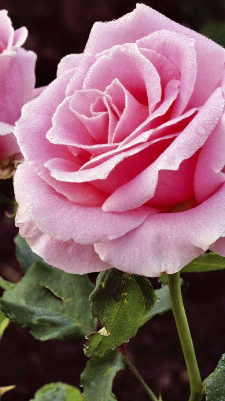 Beautiful Beautiful Wallpapers Of Flower Gardens
