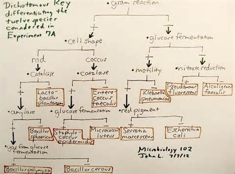 Flow Chart Microbiology Unknown Yahoo Image Search Results