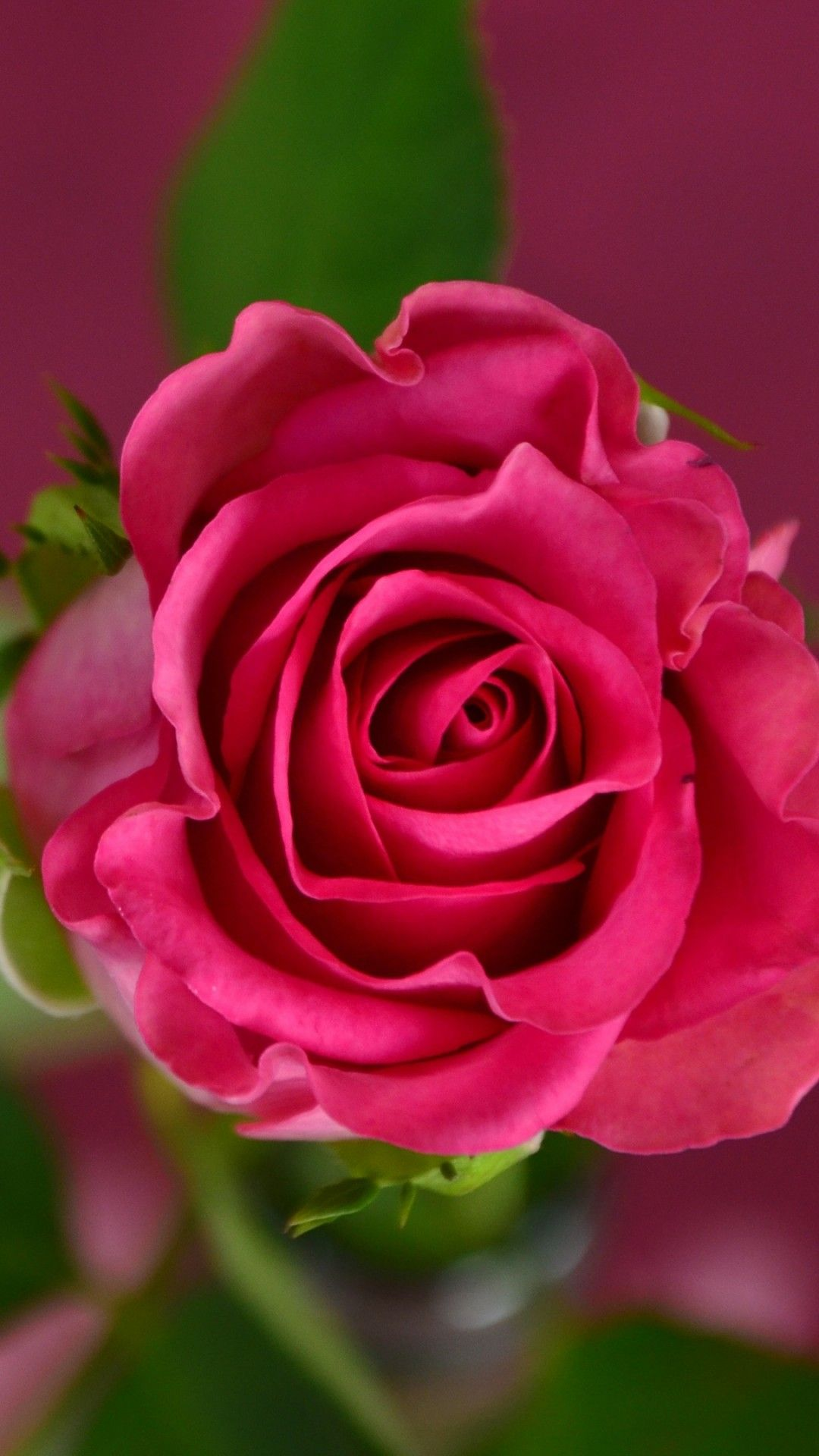 Flower Wallpapers Background Hupages Download Iphone Wallpapers Pink Spring Flowers Beautiful Roses Wallpaper Nature Flowers