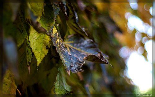 Non solo foglie