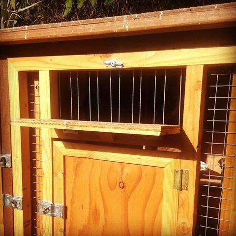#Birmingham #Roller kit box trap door open. #birminghamrollers #pigeon #rollers & Birmingham #Roller kit box trap door open. #birminghamrollers ... Pezcame.Com