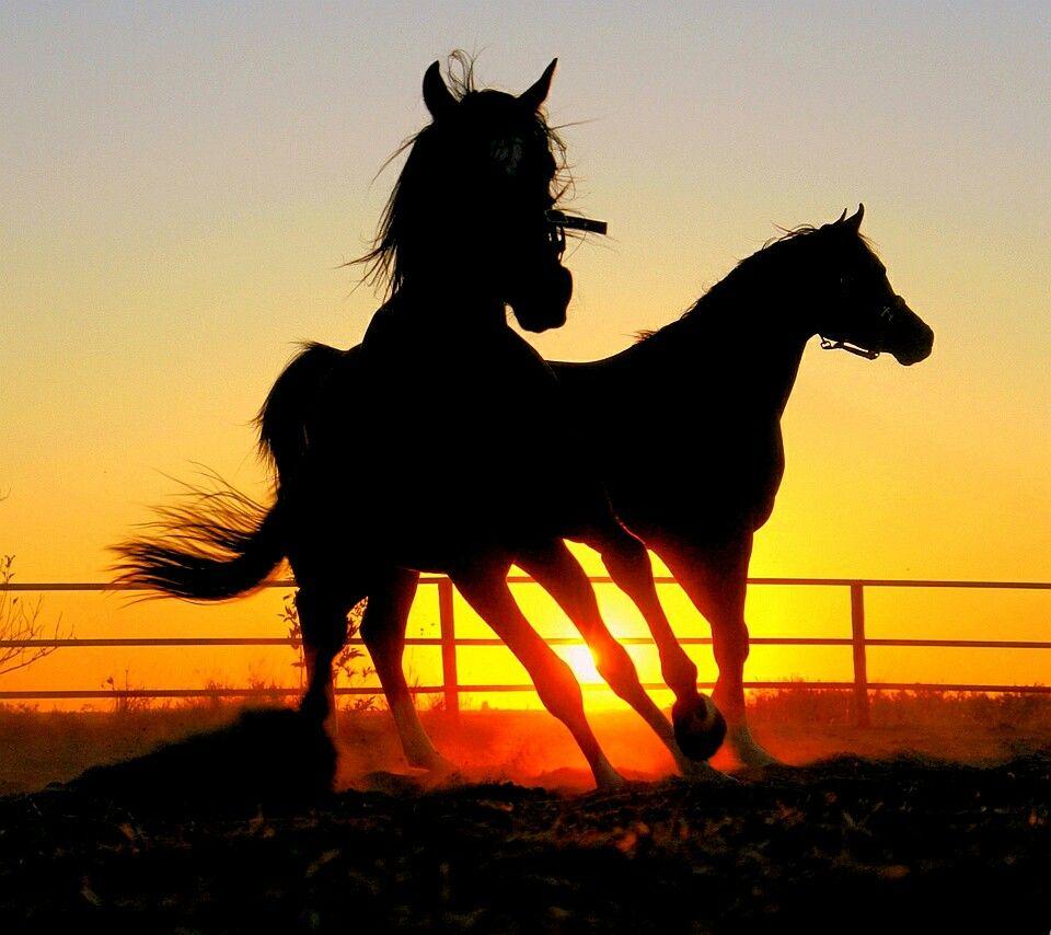 Beautiful Wallpaper Horse Sunrise - 750e252f1cd5f11fc9fa0d506c9343d2  Pic_834065.jpg
