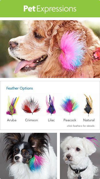 Feathering Options Dog Grooming Petsmart Grooming Dog Hair