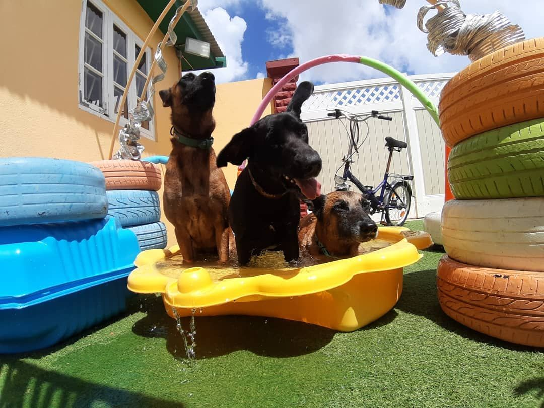 Herby The Update From The Doggys In The Dog Hotel Aruba From Today
