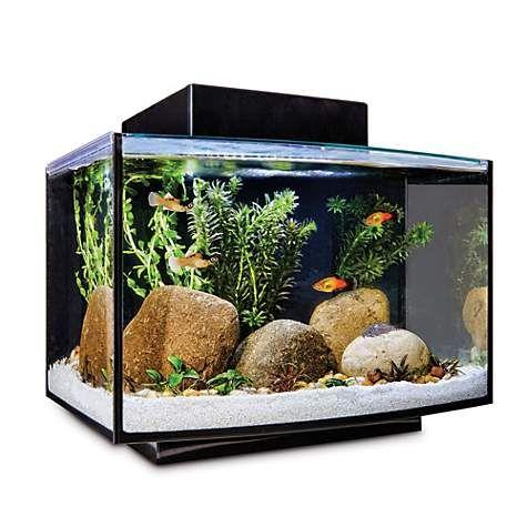 Imagitarium Platform Freshwater Aquarium Kit 6 6 Gal Petco Aquarium Kit Tropical Fish Tanks Freshwater Aquarium