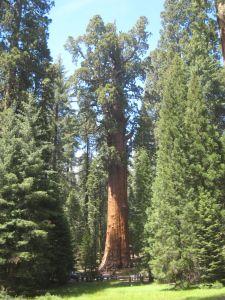 General Sherman | Summer fun in Sequoia!