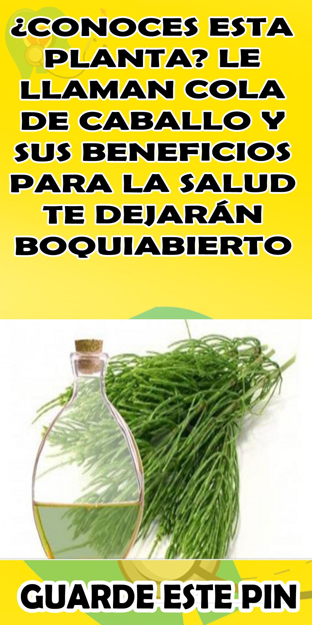 Conoces Esta Planta Le Llaman Cola De Caballo Y Sus Beneficios Para La Salud Te Dejarán Boqui Hierba Cola De Caballo Cola De Caballo Planta Hierbas Curativas
