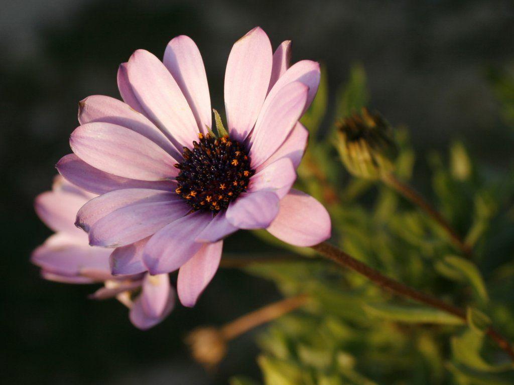 Kwiaty Tapety Na Telefon 19330 Flower Beauty Beautiful Flowers Pink Flowers