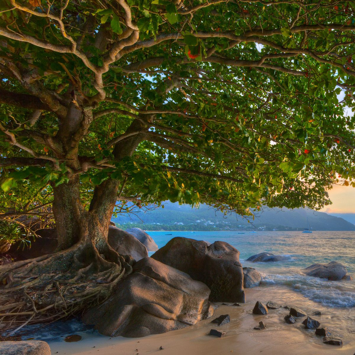 Seychelles Island Beaches: Seychelles Beaches By Mark Smith