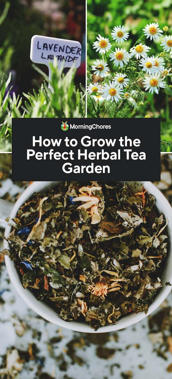 Photo of How to Plan the Perfect Herbal Tea Garden