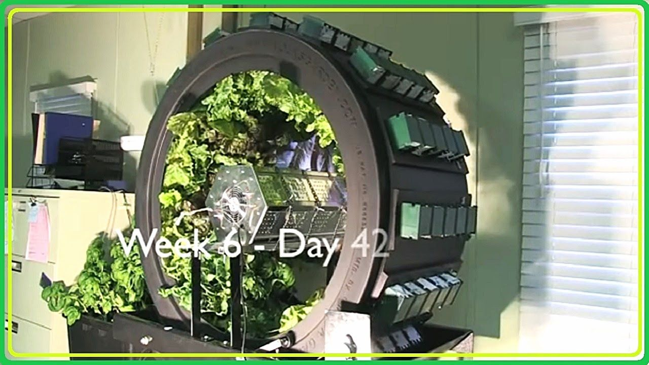 VIDEO Vertical Hydroponics System (Vertical Farming and