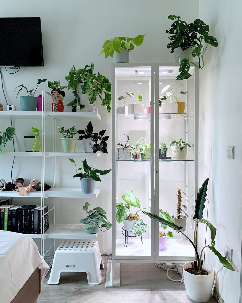 New View In My Bedroom Got A Greenhouse Installed For Those Gorgeous Humidity Loving Babies Info Ikea Mils Ikea Plants Indoor Greenhouse Cute Room Ideas