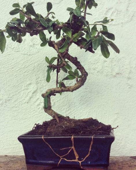 Vaso bonsai in gres giapponese, Kintsugi originale ...