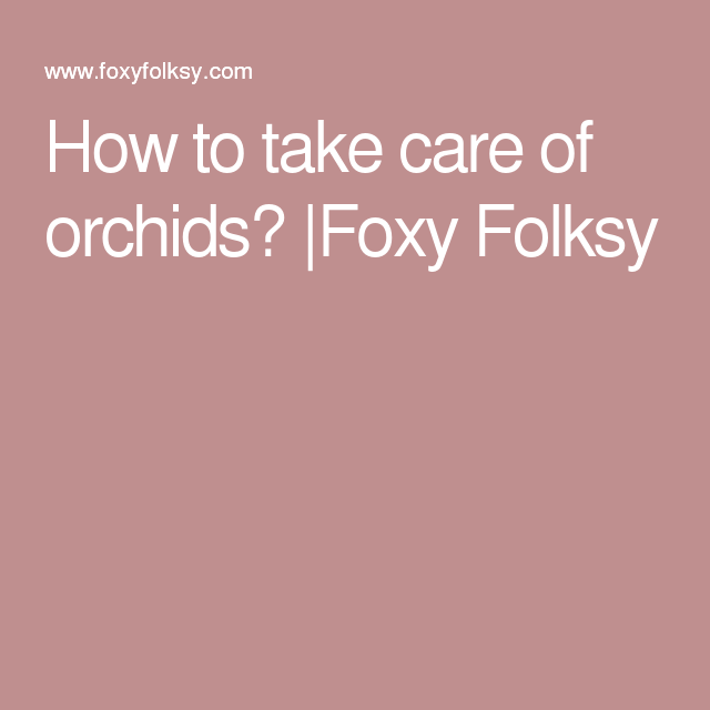 How to take care of orchids?  Foxy Folksy