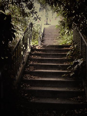 There Are 11 Secret Stairs Walks In My Neighborhood   Silver Lake. Hoping  To Get Through All The Walks Soon.