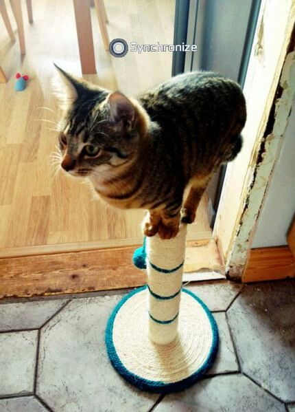 """Synchronizing. The cat's """"viewpoint."""" Those that know what I'm talking about are cool!"""