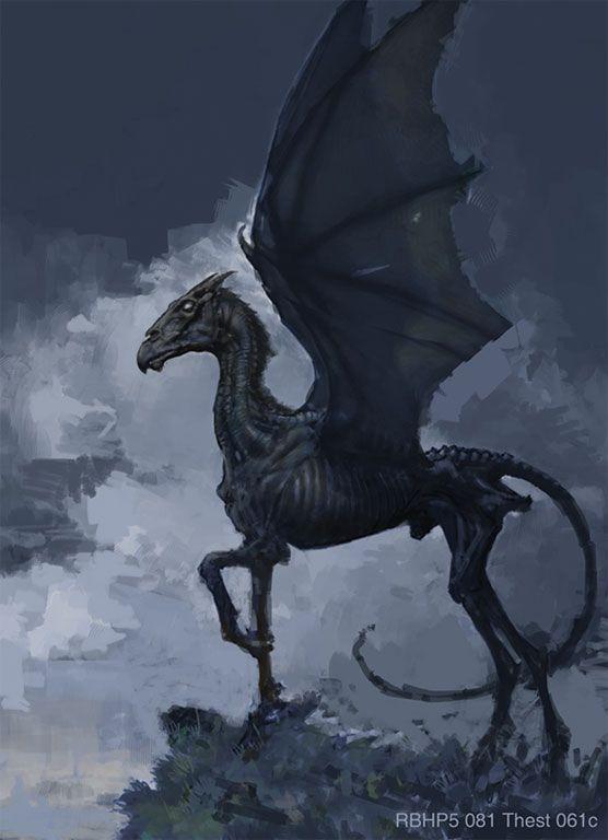 Thestral Postcard Zazzle Com Harry Potter Creatures Harry Potter Art Phoenix Harry Potter