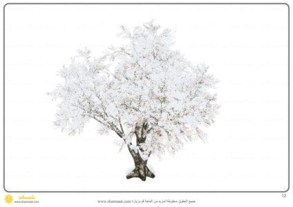 اخلاف شكل الشجرة في الفصول الاربعة 3 Plants Flowers Dandelion
