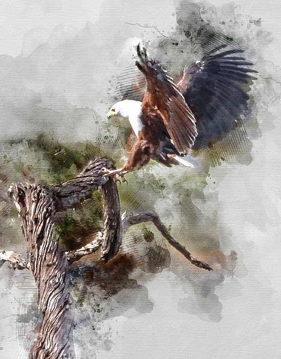 Water Paint African Fish Eagle Landing By Ronel Broderick Water Painting Eagle Painting Clown Paintings