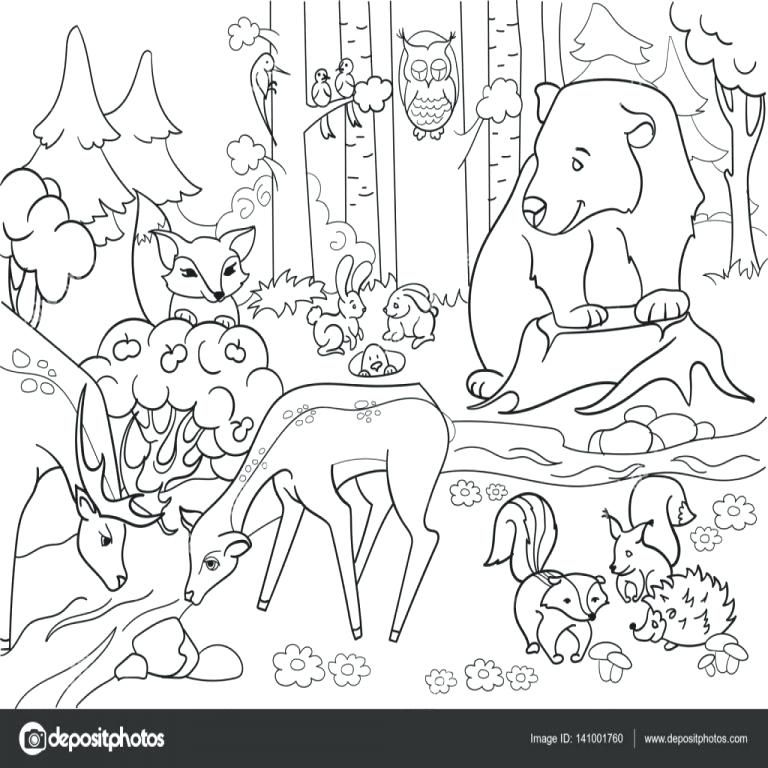 Bosque De Animales Para Colorear Para Con 6 Paisajes De Bosque Con Animalitos Para Colorear Animales Para Pintar Paisajes Con Animales