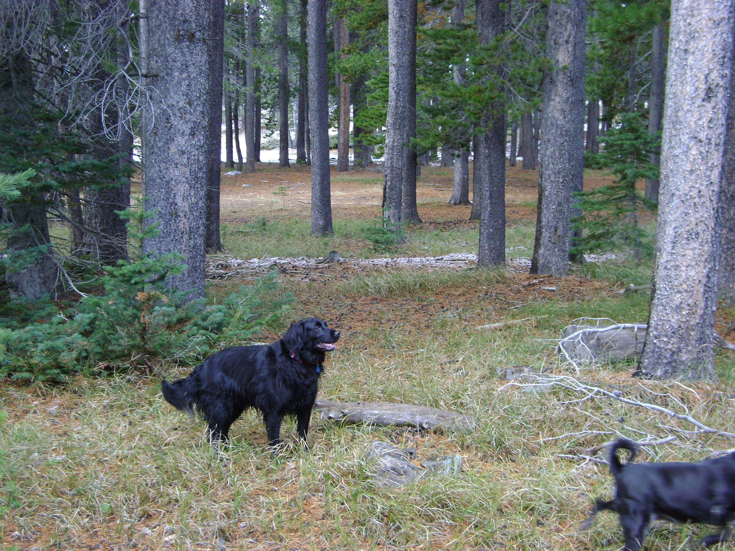 My Retriever Suzy On Casper Mountain Critters Tame And Wild