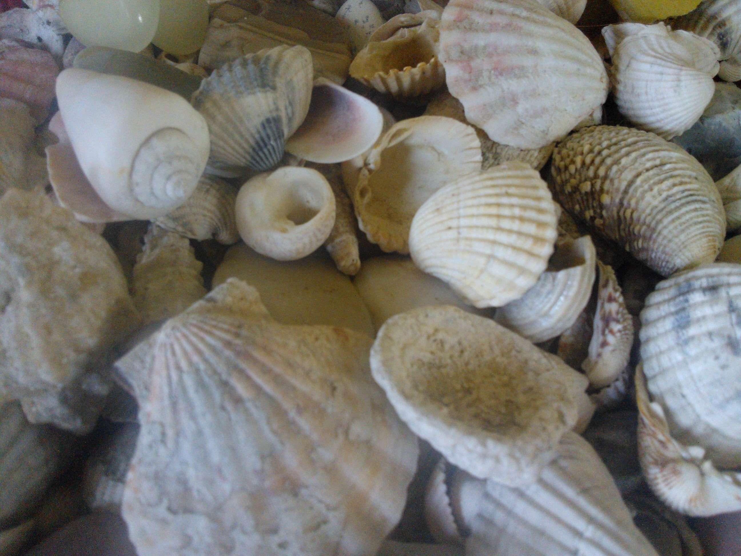 Sea Shells Shells Shells Sea Shells Sea