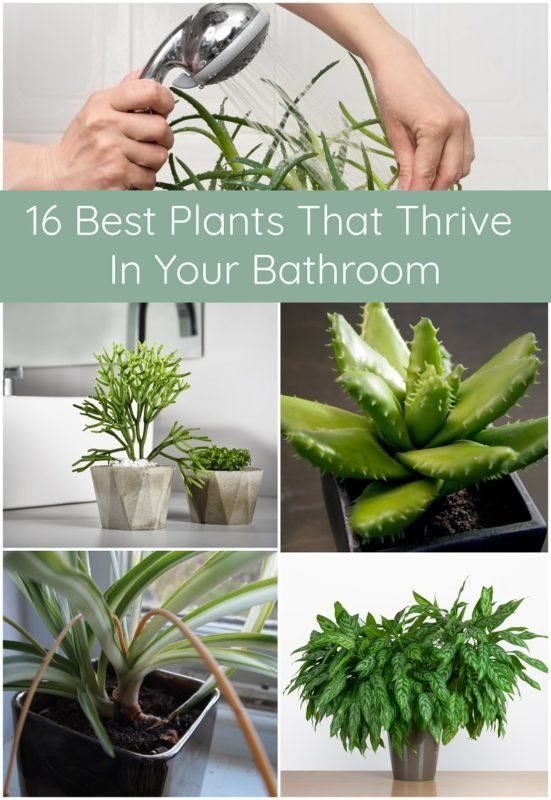 Photo of 16 Best Plants That Thrive In Your Bathroom