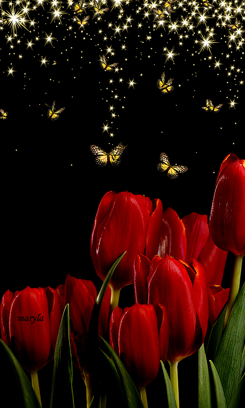 Download 480x800 Red Tulips Cell Phone Wallpaper Category Flowers Cellphone Wallpaper Phone Wallpaper Tulips