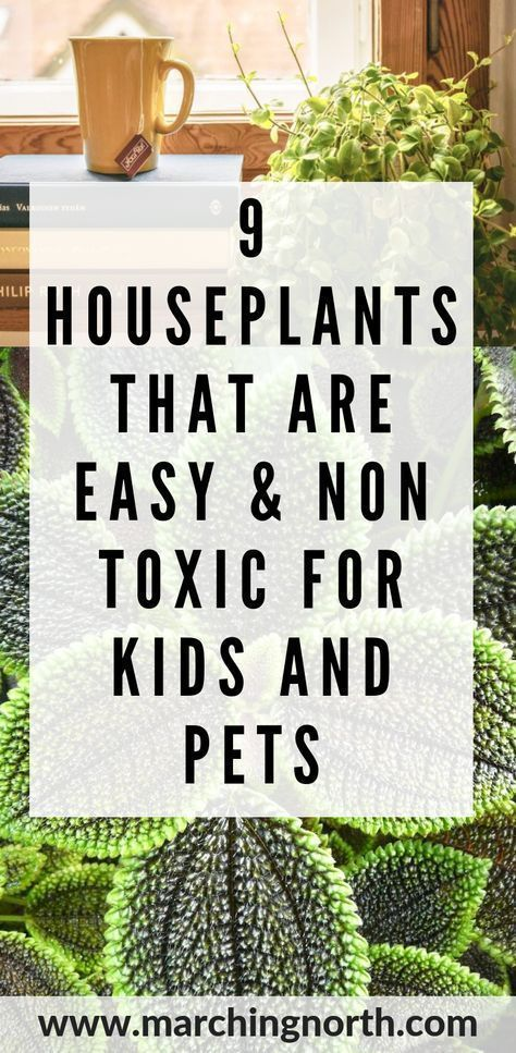 9 House Plants That Are Easy & Non-Toxic For Kids and Pets | Marching North