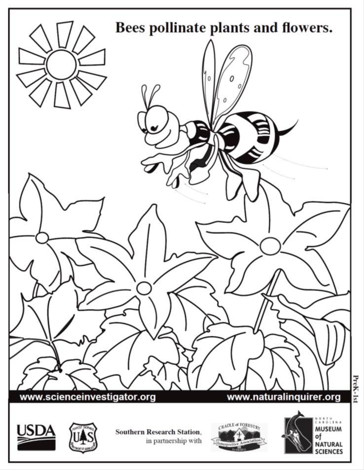 Pin by Natural Inquirer on Bees for PreK Students