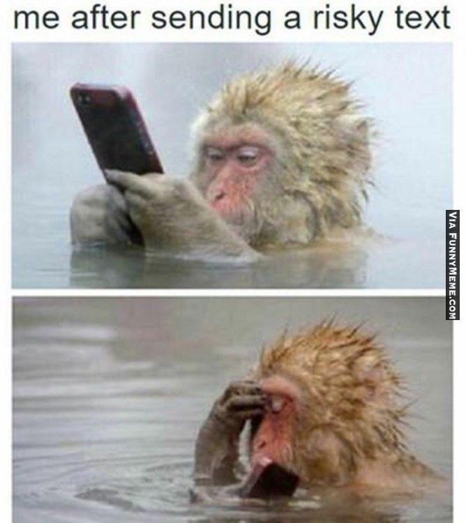 7517088e0f3ee38302abaa9a37d0d690 animal memes stupid me animal memes pinterest memes