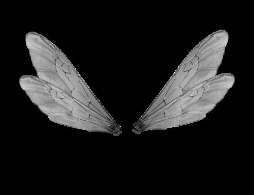 The Secret Fairy Garden Wings Wings Png Fairy Wings