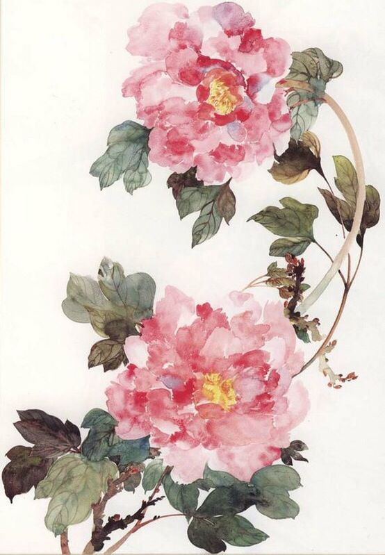 Pink Chinese Flower Rose Painting Flower Art Floral Art