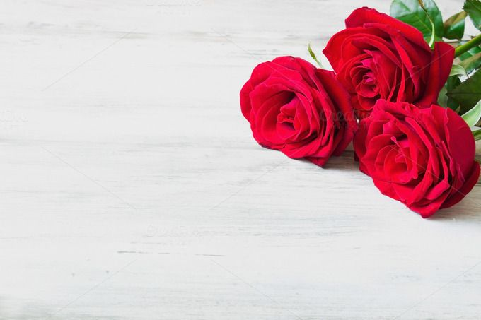 Fresh Red Roses Red Roses Red Roses Background Rose