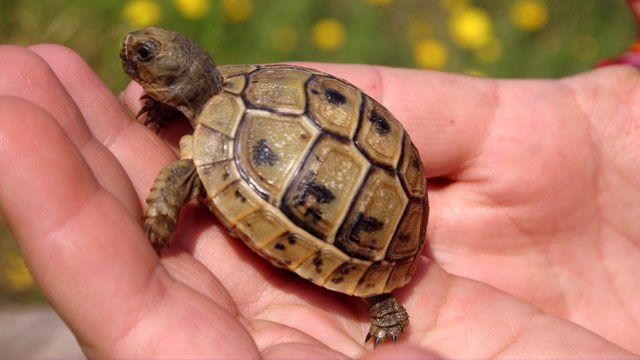 Baby-Schildkröte: Die richtige Pflege für junge Schildkröten