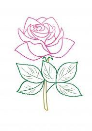 Раскраска розы с цветным контуром | Розы, Цветы и Раскраски