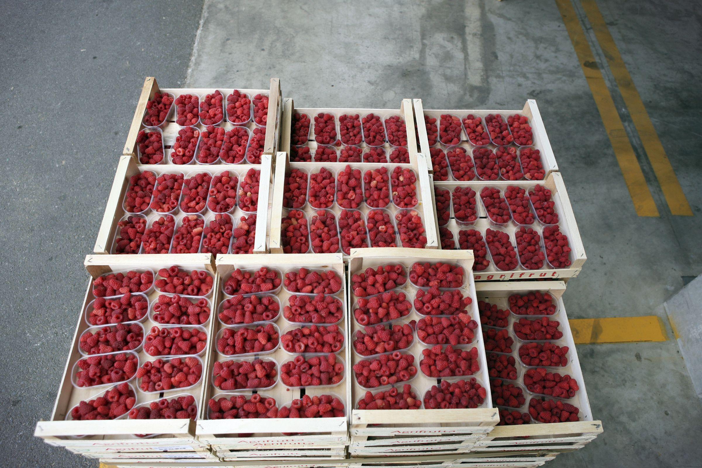 Coltivare Lamponi In Vaso i lamponi - peveragno   food, strawberry, fruit