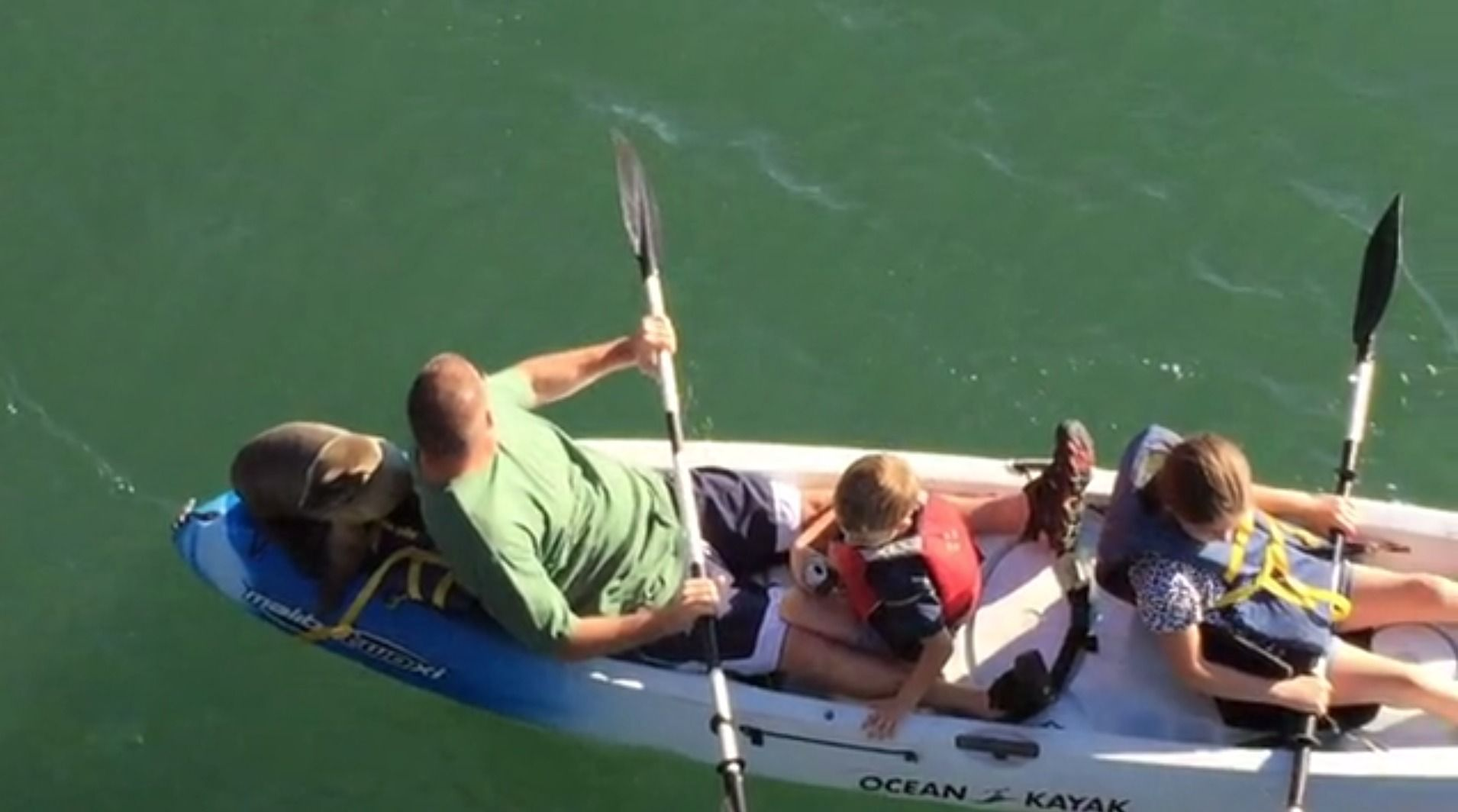 They felt some extra weight on the kayak then they looked