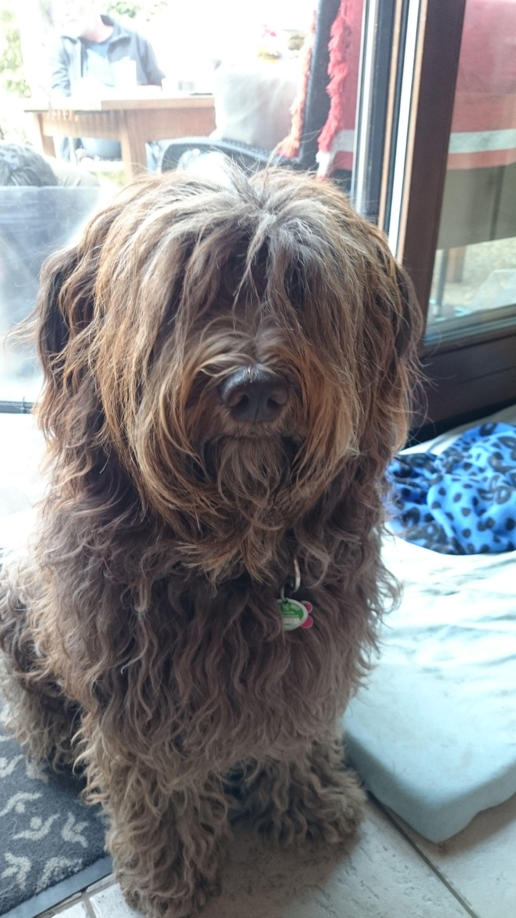 Pin Van Pawshake Deutschland Op Pawshake Deutschland Hunde Schattigste Honden Honden Terrier