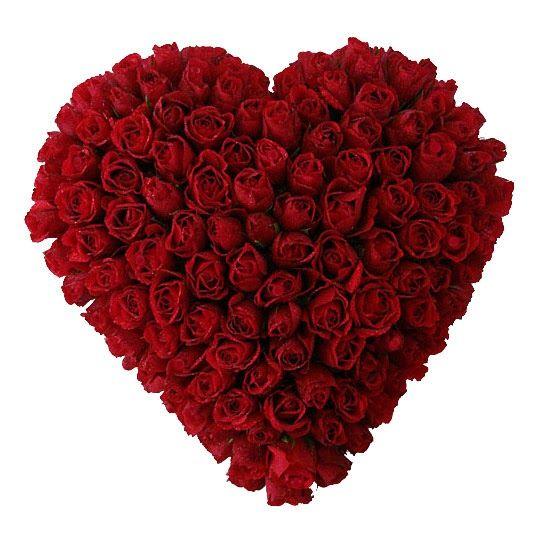 Bunga Mawar Merah Penuh Gairah Cinta Florist Jakarta Flower Delivery Flowers Meaning Red Roses