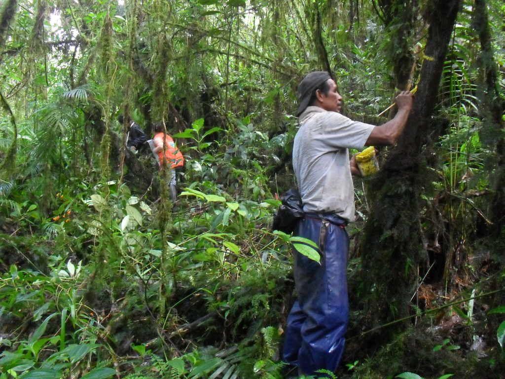 Manejo forestal sostenible timeline greenhouse gasses for Manejo de viveros forestales