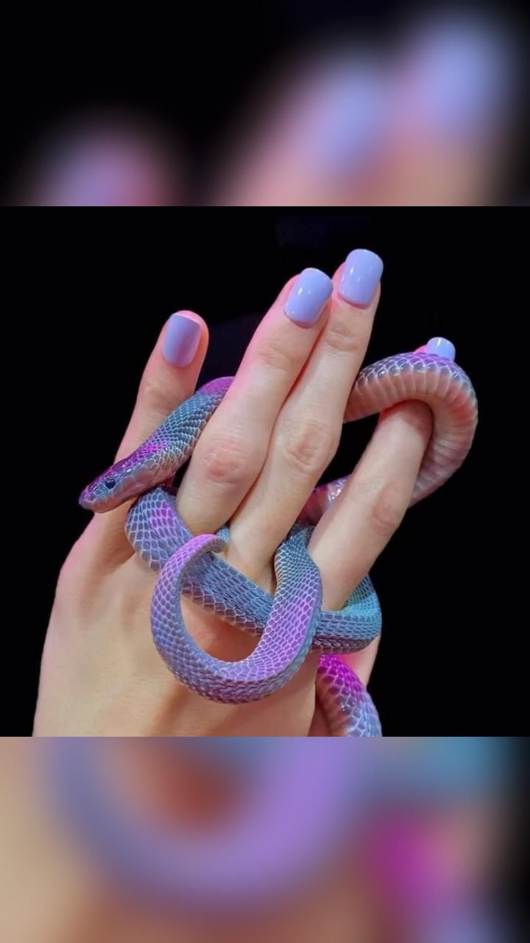 Colors of snake
