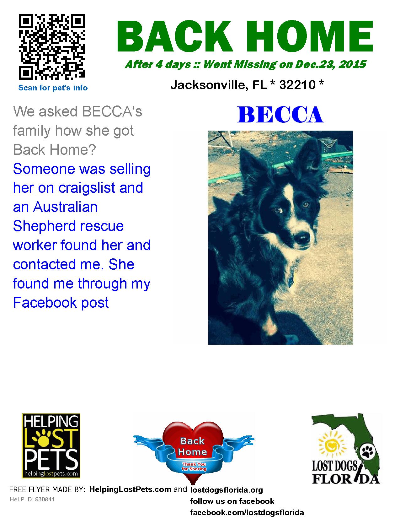Lost Dog Australian Shepherd Jacksonville Fl United States