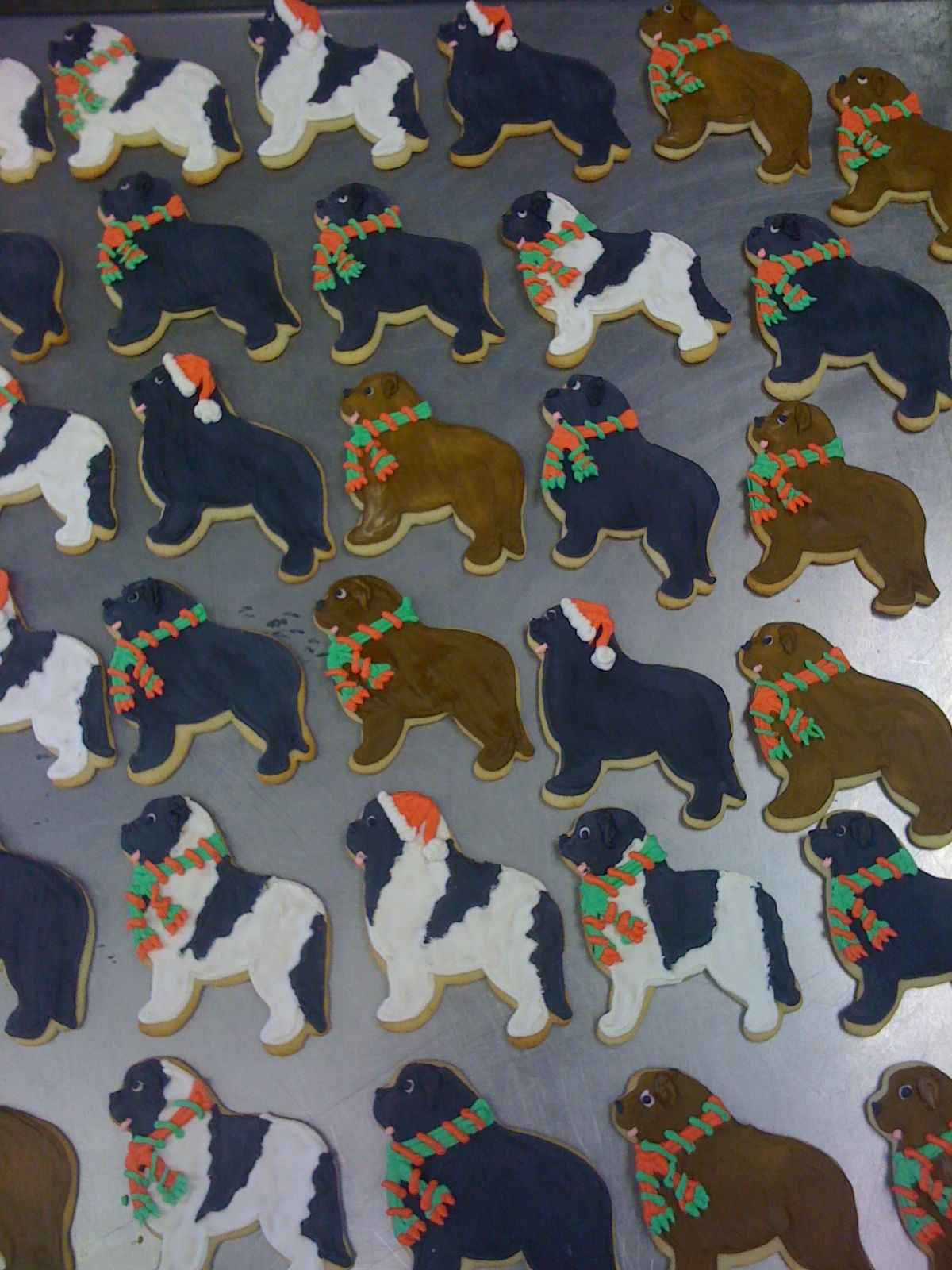 Newfoundland Dog Cookies I Made For Christmas Newfie Dog Cookies
