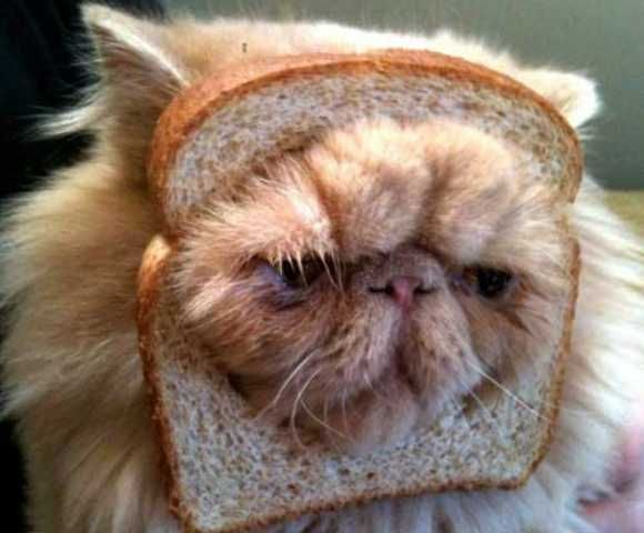 Pure Bread Cat!! ........from Ghoul For Cats: The Top 10 Freakiest Scariest Halloween Cat Costumes