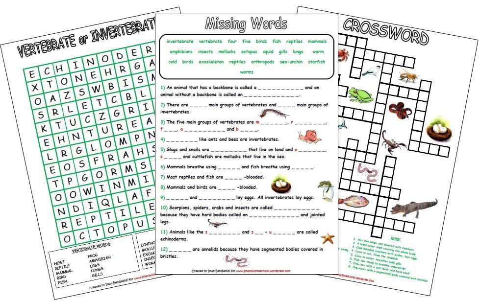Animal Classification Activity Worksheets Animal