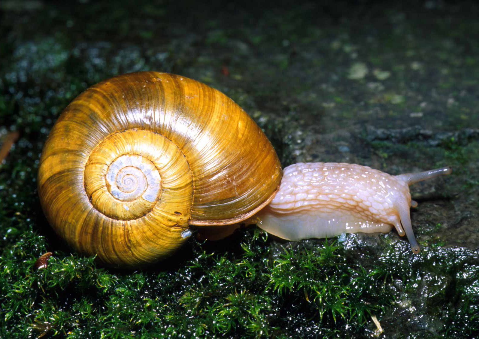 Pictures Of Mollusca 56